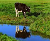 ¿Cuál es la madre del borrego de la lechería nacional? – Segunda parte
